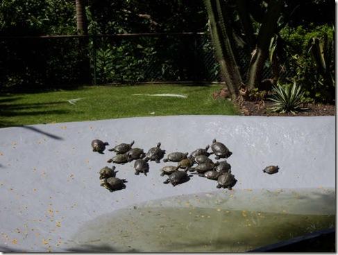 madeira news blog 0907 elaine o sol jardim botanico 3