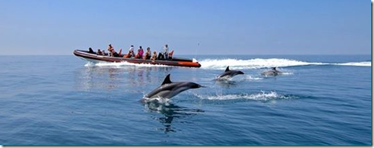 boat observing dolphins