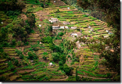 Agricultural terraces of Madeira