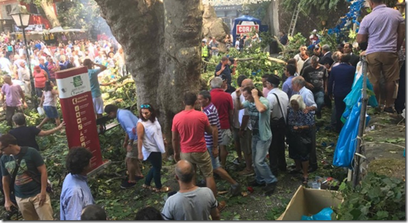 Tree falls in Monte, Funchal