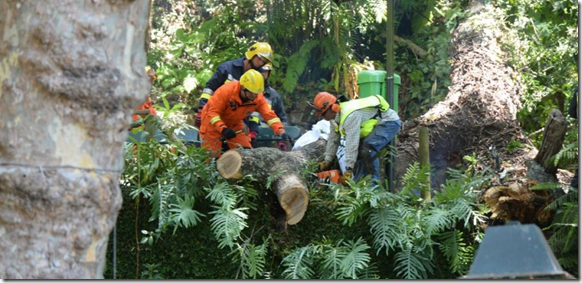 Tree being removed in Monte, Funchal
