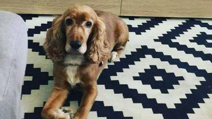 Pet dies on TAP flight