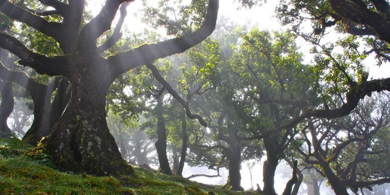 Luarissilva forest