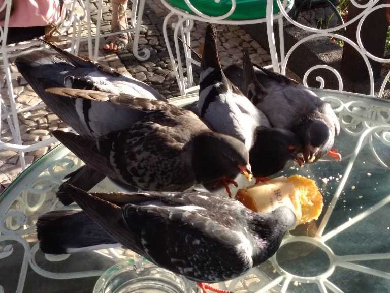 Pigeons invade cafe table