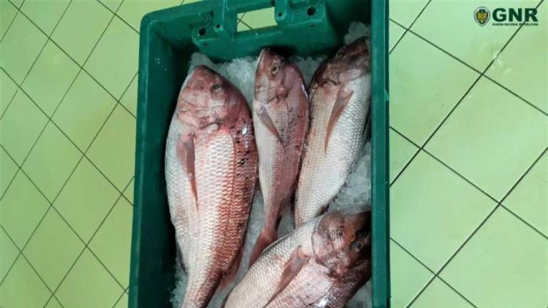 Illegal fish catch seized by police • Madeira Island News